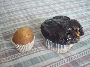 Size comparison between a regular muffin (righ...