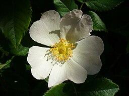 Beautifulflower5
