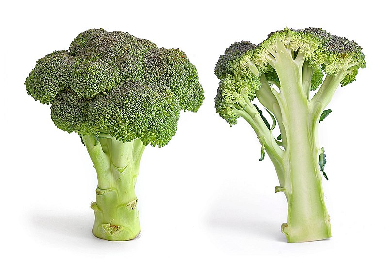 File:Broccoli and cross section edit.jpg