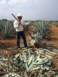 Cocina mexicana en el siglo XIX  Wikipedia la
