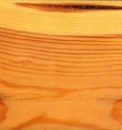softwood stem diagram [ 1200 x 898 Pixel ]