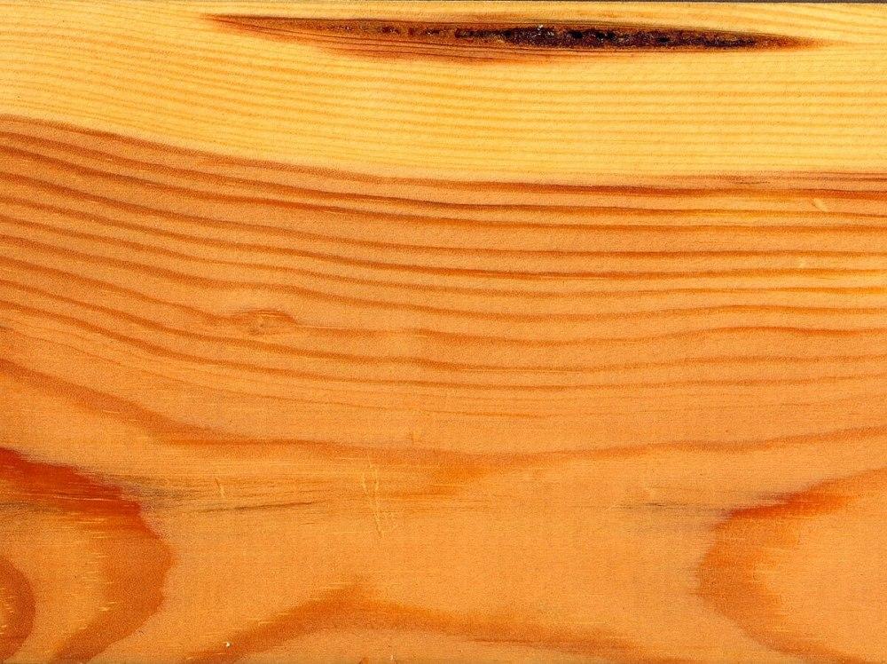 medium resolution of softwood stem diagram