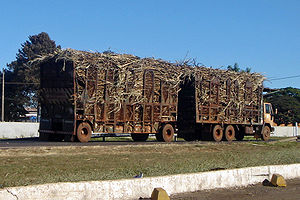 English: Typical transport for the sugar cane ...