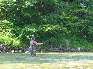 Fly fishing in a river