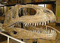 Giganotosaurius (4/5)