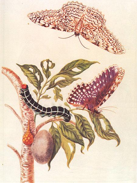metamorfosi di farfalla