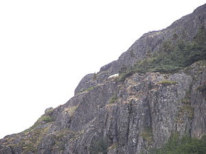 A mountain goat from the Klondike Highway near...