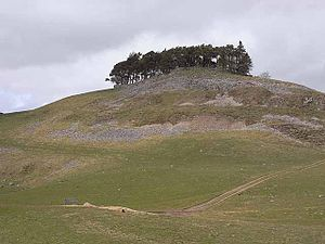 English: Kirkcarrion A clump of trees surmount...