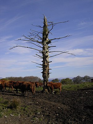 English: Scratching Tree. Unusual tottom pole ...