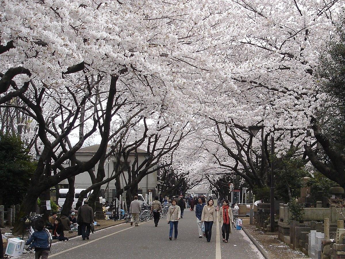 Yanaka Cemetery  Wikipedia