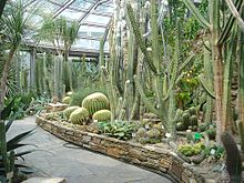 Succulentenkas Van De Botanischer Garten Berlin