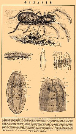 Brockhaus and Efron Encyclopedic Dictionary b69 258-0