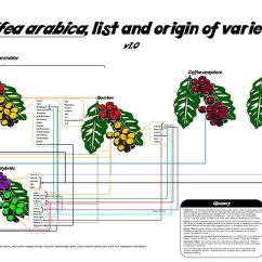 Bean Seedling Diagram Honda Ruckus Ignition Wiring List Of Coffee Varieties - Wikipedia