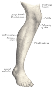 Lateral aspect of right leg.