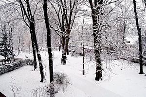 Trees1