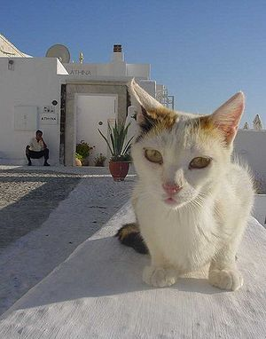 Greek Cat