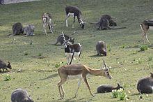 parc animalier de clères