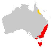 Wilayah Quoll Harimau:D.m. gracilis dan D.m. maculatus.