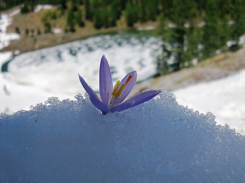haiku, carpe diem special, writing, Japanese poetry, fifth morning