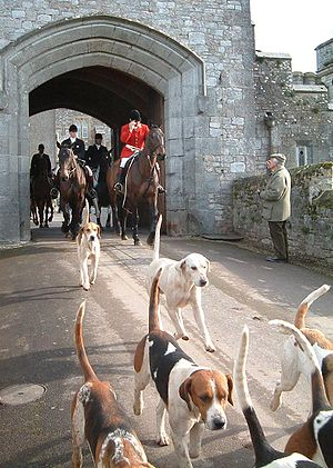 Picture of the hunt master and hounds exiting ...