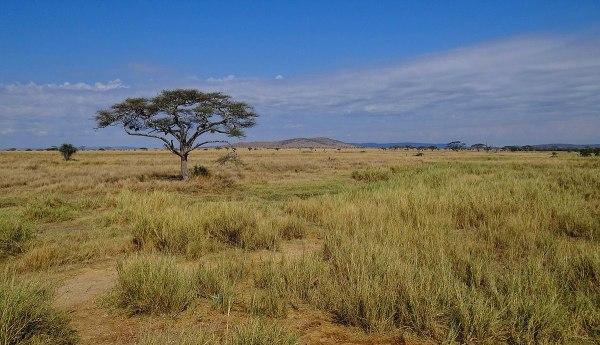 serengeti national park - wikipedia