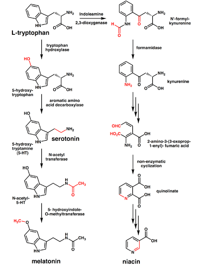 § Biosynthesis and chemical synthesis [ edit ]