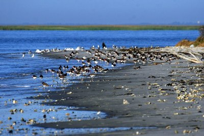 Wolf Island National Wildlife Refuge - Wikipedia