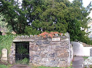Fortingall Yew, Scotland - the oldest living c...