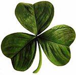 Un shamrock, o trébol de tres hojas t�pico irlandés