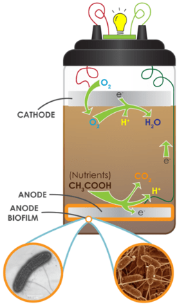 Microbial Fuel Cell