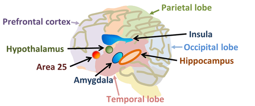 http://en.wikipedia.org/wiki/Neuroscience_of_free_will
