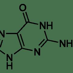 Atomic Symbol Diagram Mini Usb Wiring Guanine  Wikipédia