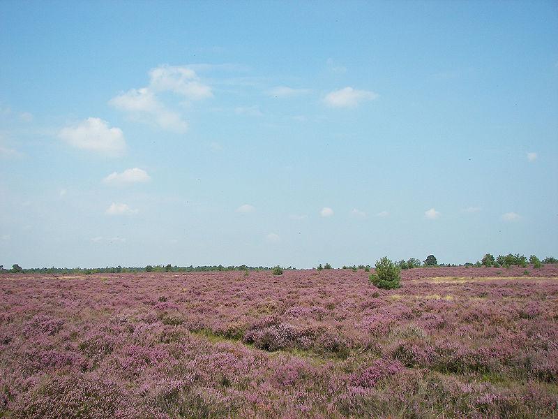 File:Lüneburger Heide 109.jpg