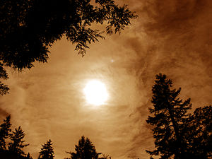 English: Moon, Clouds & Treetops. Portland, Or...