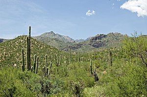 English: This is a view of Sabino Canyon, nort...