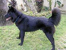 Anjing  Wikipedia bahasa Indonesia ensiklopedia bebas