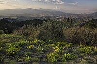 私の公有地のロードトリップ - オレゴンのカスケード - シスキヨー国定記念物(18908781818).jpg