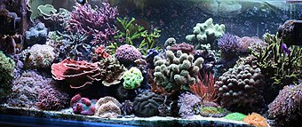 Aquarium filled densely with corals in many shapes, and bright colors including pink, purple, blue and green.