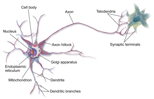 small resolution of label nerve diagram