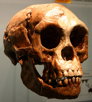 "Homo floresiensis (the ""Hobbit"")"
