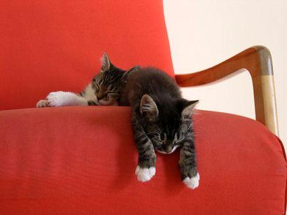 Louis-&-Chanel-taking-a-nap