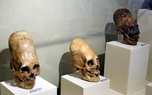 These skulls are on display at Museo Regional ...