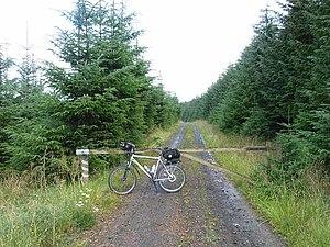 English: Pope's Hill, Kielder Forest. A mounta...