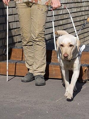 Česky: Způsob vedení nevidomého člověka psem, ...