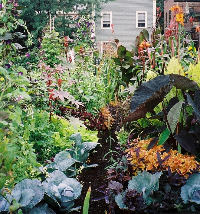 https://i0.wp.com/upload.wikimedia.org/wikipedia/commons/thumb/1/11/Vegetables_and_ornamental_plants_in_SELROSLT%27s_Rutland-Washington_Garden.jpg/839px-Vegetables_and_ornamental_plants_in_SELROSLT%27s_Rutland-Washington_Garden.jpg?resize=661%2C709&ssl=1