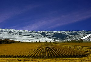 Vineyard in Mendoza Province, Argentina.