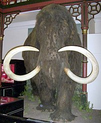 Mammoth (reconstruction) at Ipswich Museum, Ip...
