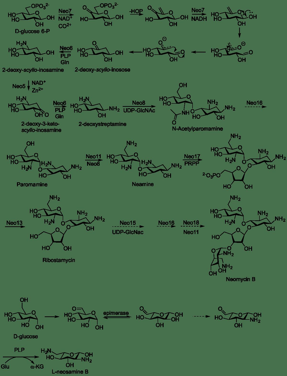 新黴素 - 維基百科,自由的百科全書