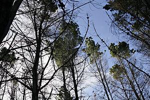 Hutan  Wikipedia Bahasa Melayu ensiklopedia bebas