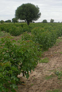 from to seed plant diagram tekonsha primus wiring purgiernuss – wikipedia